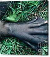 Beaver Foot Canvas Print