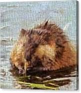 Beaver Portrait On Canvas Canvas Print