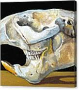 Beaver Skull 1 Canvas Print