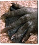 Beavers Hind Foot Canvas Print