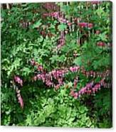 Bed Of Bleeding Hearts Canvas Print