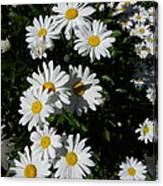 Bed Of Daisies Canvas Print