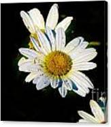 Bed Of Daisy's For Daisy Canvas Print