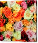 Bed Of Roses Canvas Print