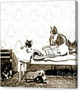 Bed Time For Kitty Cats Histrica Photo Circa 1900 Canvas Print