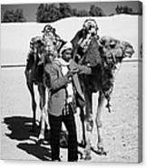 Bedouin Camel Minder Recieves Call On A Mobile Phone With Camels In The Sahara Desert At Douz Tunisia Canvas Print