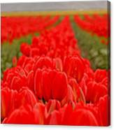 Beds Of Red Canvas Print