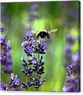 Bee 4 Canvas Print