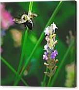Bee 6 Canvas Print