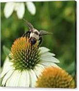 Bee 7 Canvas Print