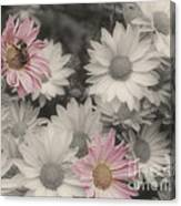 Bee And Daisies In Partial Color Canvas Print
