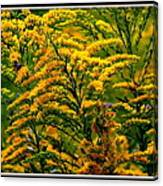 Bee And Goldenrod Canvas Print