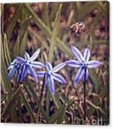 Bee And Squill Canvas Print