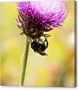 Bee And Thistle Canvas Print