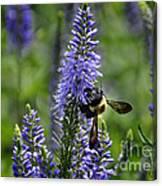 Bee Blue Canvas Print
