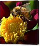 Bee Business Canvas Print