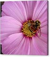 Bee Cosmos Canvas Print