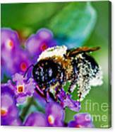 Super Bee Covered With Pollen Canvas Print