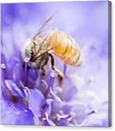 Bee Dream Canvas Print