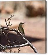 Bee-eater V15 Canvas Print