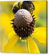 Bee-hind Canvas Print