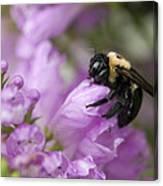 Bee Hug Canvas Print