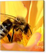 Bee In Flower Canvas Print