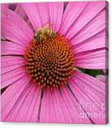 Bee In The Pink Canvas Print