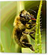 Bee Juice Canvas Print