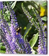Bee Lavendar Canvas Print