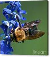 Bee On Blue Canvas Print