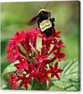 Bee On Flower Cluster Canvas Print