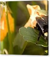 Bee On Leaf Canvas Print