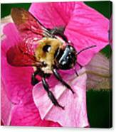 Bee On Petunia Canvas Print