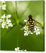 Bee On Top Of The Flower - Featured 3 Canvas Print