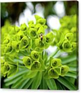 Bee Pollenating Flower Canvas Print