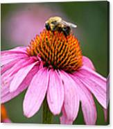 Bee Resting On Cone Flower Canvas Print