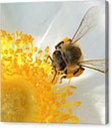 Bee-u-tiful Canvas Print