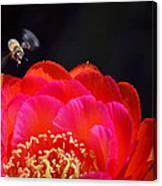 Bee Uti Full Canvas Print