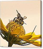 Bee Utiful Day Canvas Print