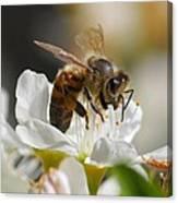 Bee4honey Canvas Print