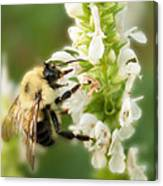 'bee'autiful Morning Canvas Print