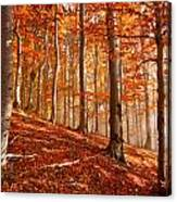 Beech Forest Canvas Print