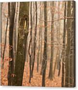 Beech Wood In Autumn Canvas Print