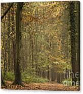 Beech Wood Walk Canvas Print