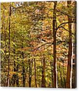 Beeches Canvas Print