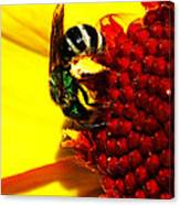 #beegreen Canvas Print