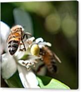 Bee's Canvas Print