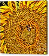 Bees On Sunflower Hdr Canvas Print