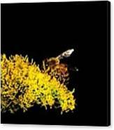 Bee's Work Canvas Print